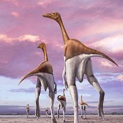 Dromiceiomimus pictures