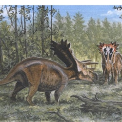 Anchiceratops pictures