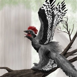 Anchiornis pictures