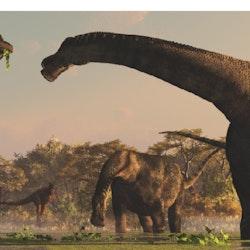 Antarctosaurus pictures