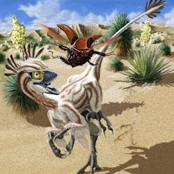 Atrociraptor pictures