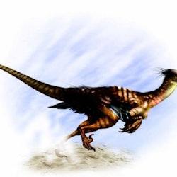 Buitreraptor pictures