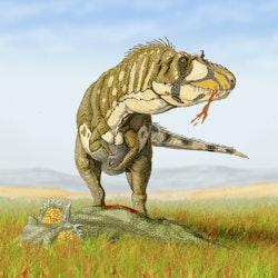 Daspletosaurus pictures