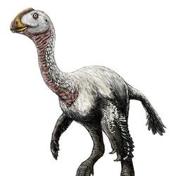 Elmisaurus pictures