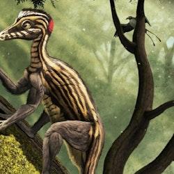 Epidendrosaurus pictures