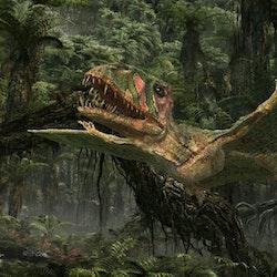 Dimorphodon pictures