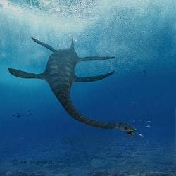 Futabasaurus pictures