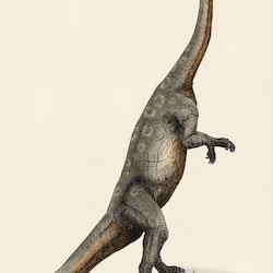Massospondylus pictures