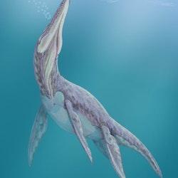 Megalneusaurus pictures
