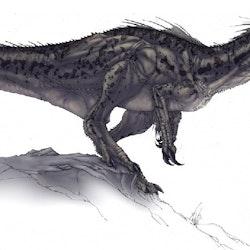 Megaraptor pictures