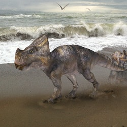 Montanoceratops pictures