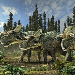 Nasutoceratops pictures