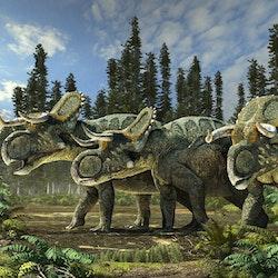 Nasutoceratops pictures