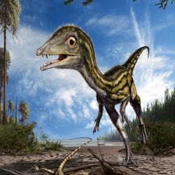 Scipionyx pictures