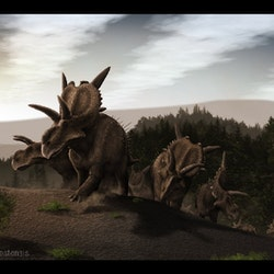 Xenoceratops pictures