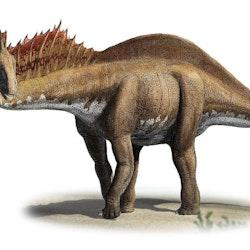Amargasaurus pictures