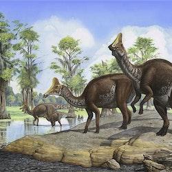 Amurosaurus pictures