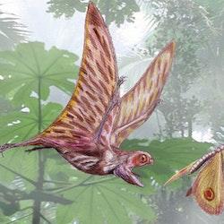 Anurognathus pictures