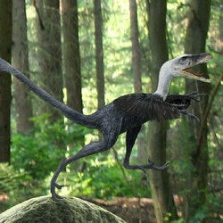 Bambiraptor pictures