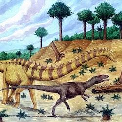 Barosaurus pictures