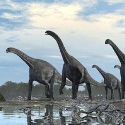 Cetiosaurus pictures