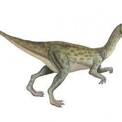 Fulgurotherium pictures