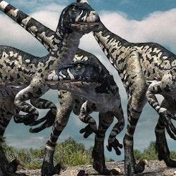 Dromaeosaurus pictures