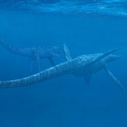 Elasmosaurus pictures
