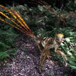 Epidexipteryx pictures