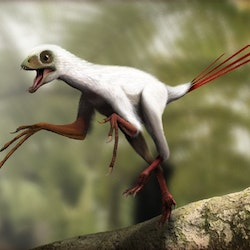 Epidexipteryx pictures