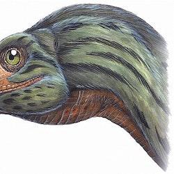 Erlikosaurus pictures