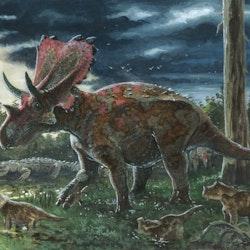 Mercuriceratops pictures