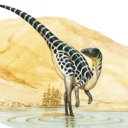 Leaellynasaura pictures