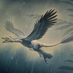 Microraptor pictures