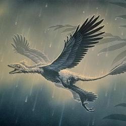 Microraptor pictures