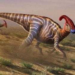 Parasaurolophus pictures