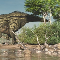 Shantungosaurus pictures