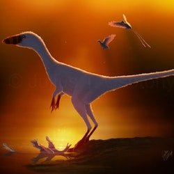 Sinocalliopteryx pictures