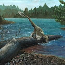 Sinornithosaurus pictures