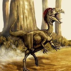 Velocisaurus pictures