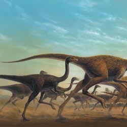 Sinornithomimus pictures