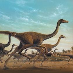 Sinornithomimus pictures