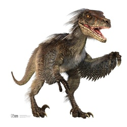 Velociraptor pictures