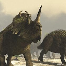 Centrosaurus pictures