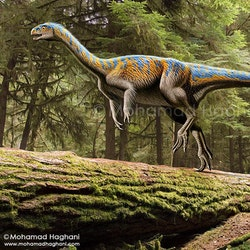 Chilesaurus pictures