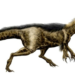 Dryptosaurus pictures
