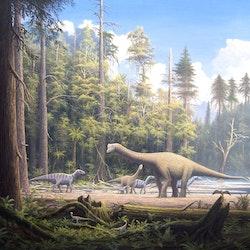 Europasaurus pictures