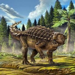 Kunbarrasaurus pictures