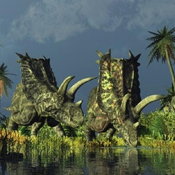 Pentaceratops pictures