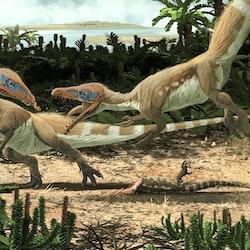 Sciurumimus pictures